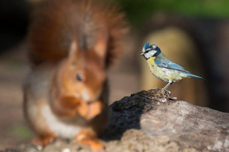 best squirrel-proof bird feeder