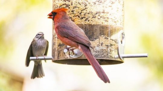 Attracting birds to feeder in backyard