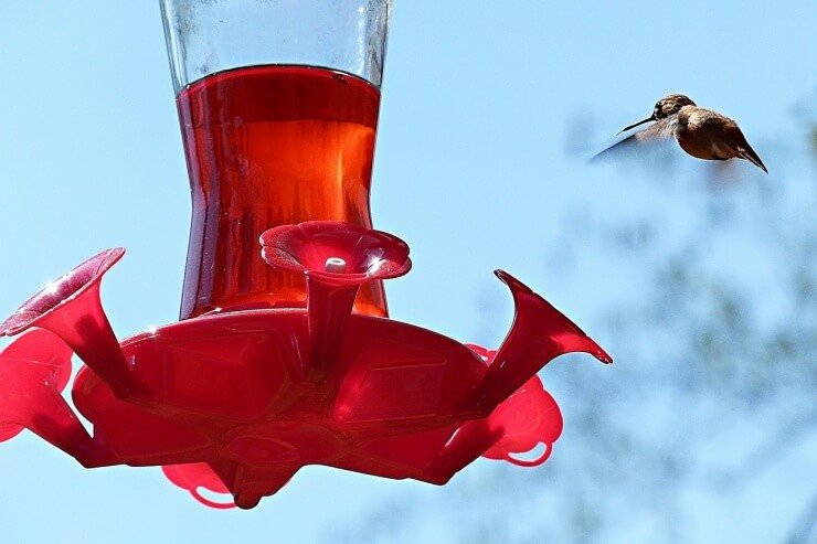 Choosing a hummingbird feeder