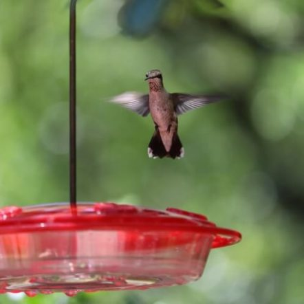 The best hummingbird feeders and how to choose one