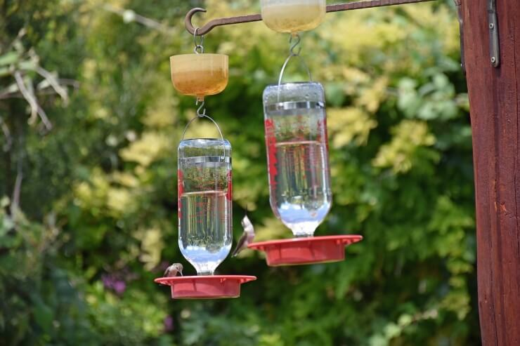 The best space to place a hummingbird feeder