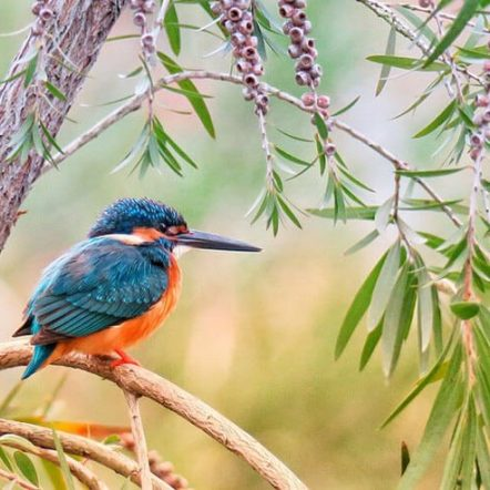 The Vibrant World Of Kingfishers