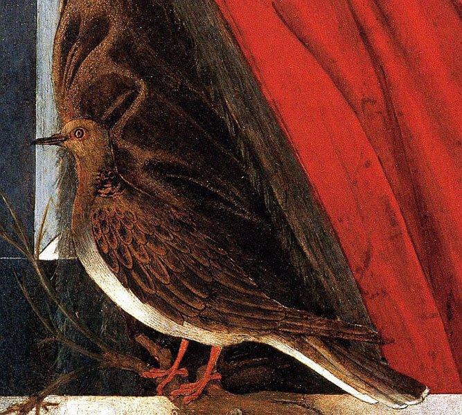 European turtle dove poetry