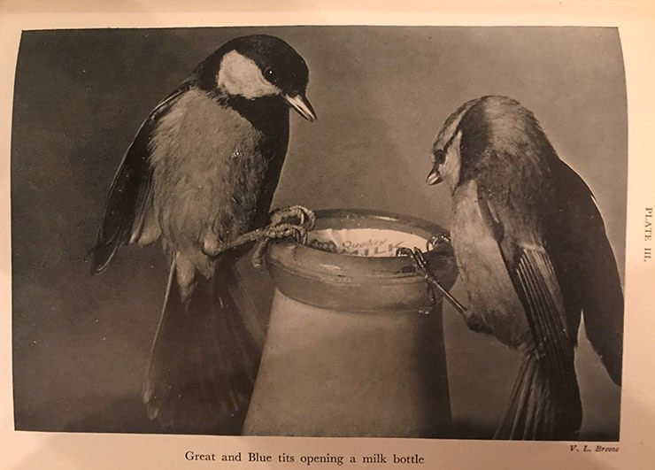 Blue tit interactions with humans