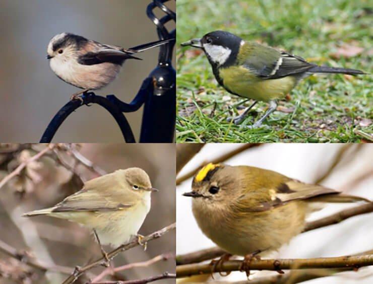 Mixed feeding flocks