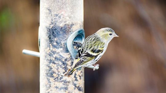 Best bird seeds and other bird foods
