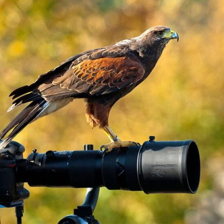 Best lenses for birds and wildlife photography
