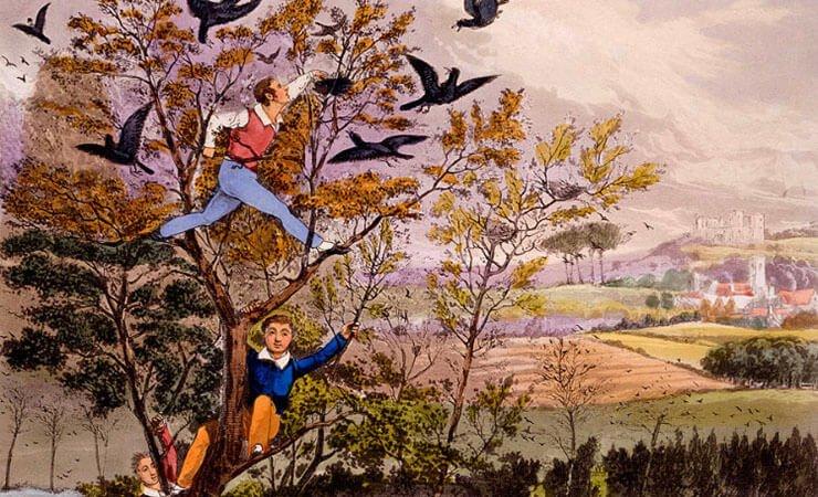 Raiding the rooks nest