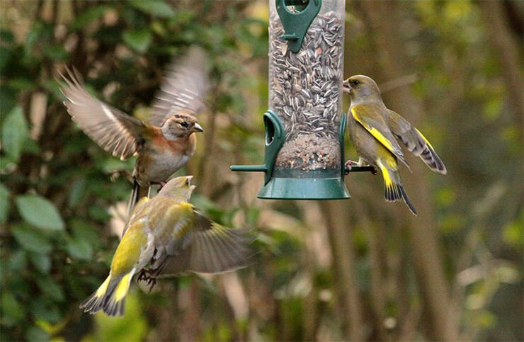Seed mixes for birds