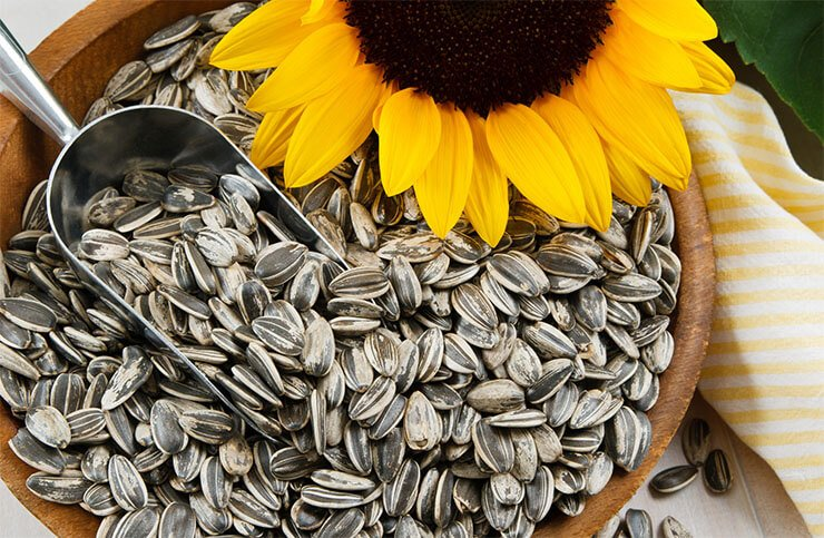 Sunflower seeds-for birds