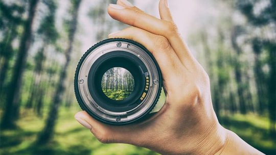 Best budget lenses for birds and wildlife photography