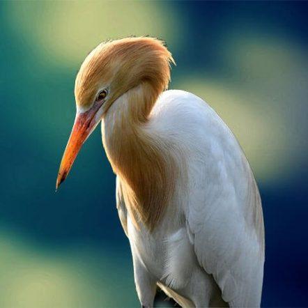 Ciconidae Index - Storks