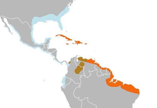 Scarlet Ibis distribution