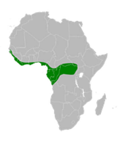 White-Crested Bittern distribution