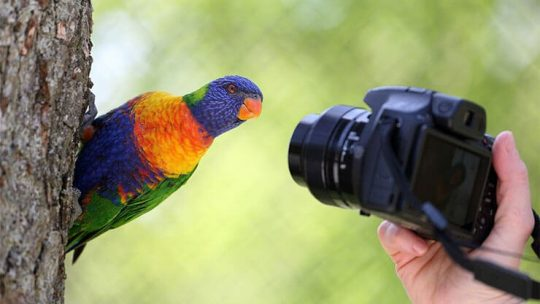 Best point and shoot cameras for bird and wildlife photography