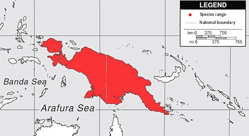 Greater Black Coucal habitat