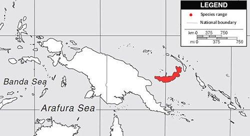 Violaceous Coucal habitat