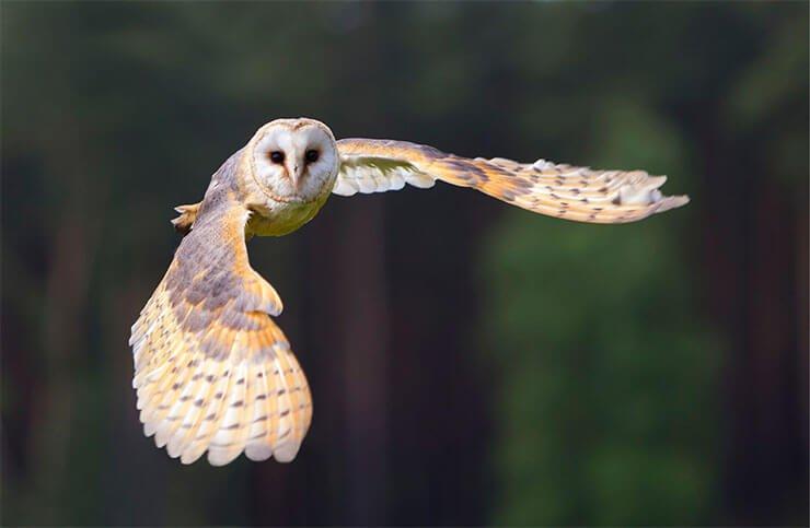 Owls of Kentucky